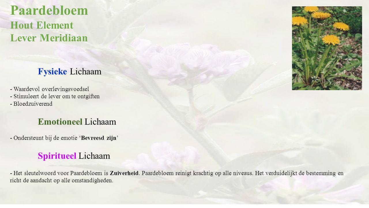 Paardebloem Hout Element Lever Meridiaan Fysieke Lichaam - Waardevol overlevingsvoedsel - Stimuleert de lever om te ontgiften - Bloedzuiverend Emotion