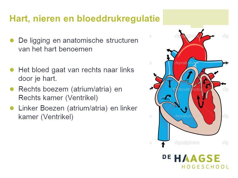 Het hart Slagaders gaan er altijd uit -> kamer/ventrikel uit Aders gaan er altijd in -> boezem/atrium in AV kleppen -> 2 kleppen (Tussen atrium en ventrikel).