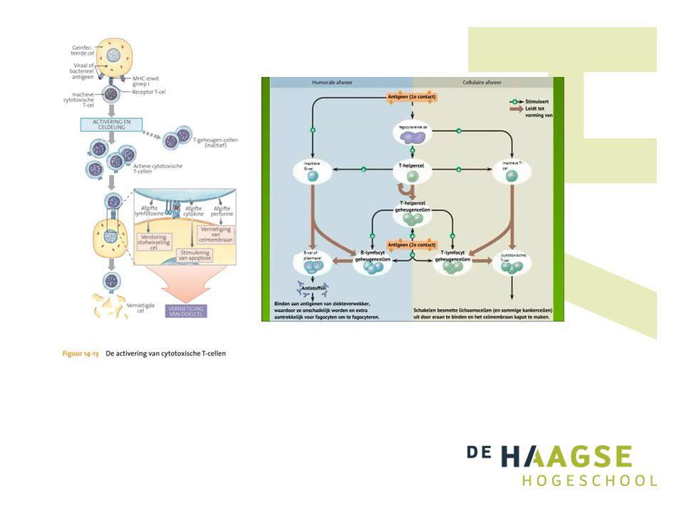 Type afweerAspecifiekSpecifiek Afweerlinie 1e linie2e linie3e linie Belangrijke cellen en weefsels HuidLeukocyten: Slijmvliezen -fagocyten (neutrofielen, eosiofielen, monocyten) -Lymfocyten: Zuur-Basofielen -B-cellen Urine en talgproducten-NK-cellen -T-cellen Geheugen.