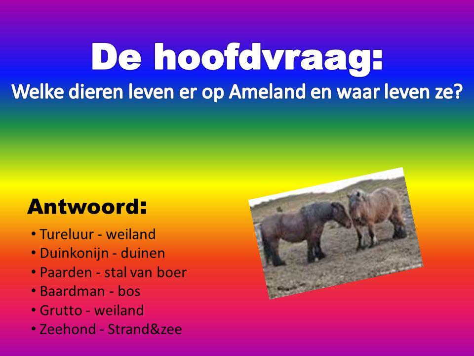 Tureluur - weiland Duinkonijn - duinen Paarden - stal van boer Baardman - bos Grutto - weiland Zeehond - Strand&zee Antwoord :