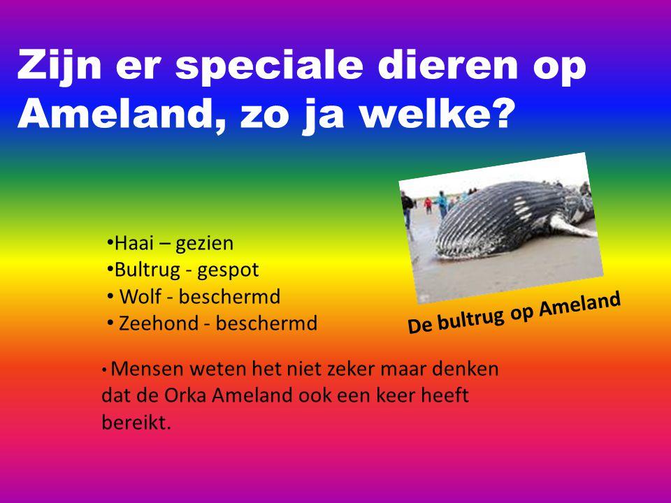 Zijn er speciale dieren op Ameland, zo ja welke.