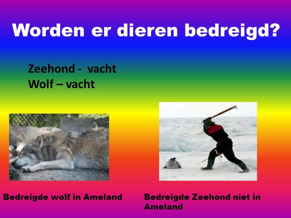 Worden er dieren bedreigd? Zeehond - vacht Wolf – vacht Bedreigde wolf in AmelandBedreigde Zeehond niet in Ameland