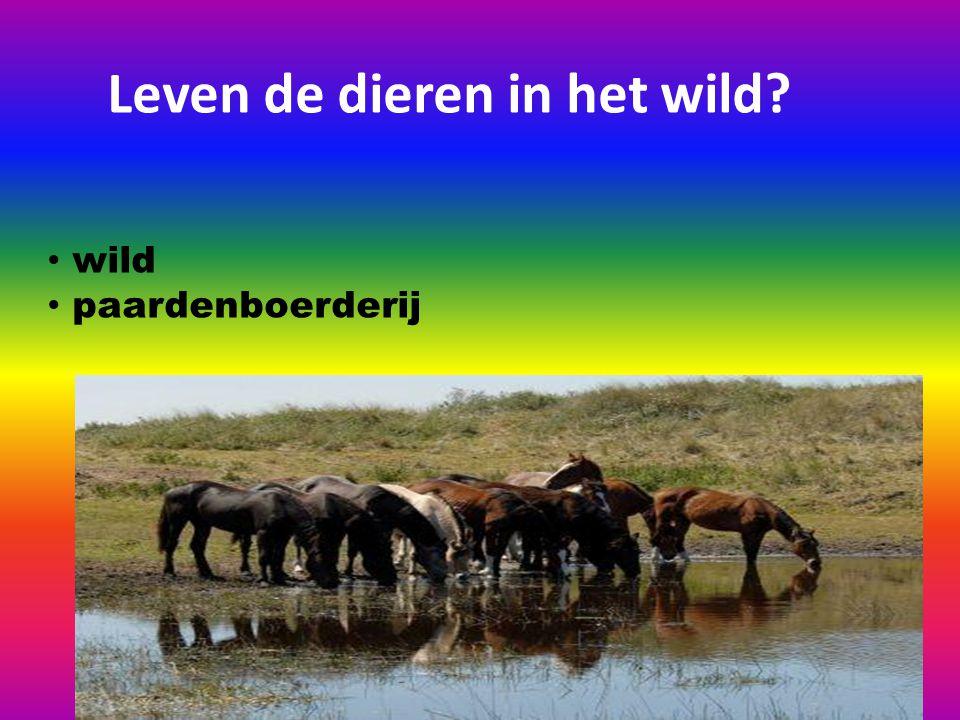 Leven de dieren in het wild? wild paardenboerderij