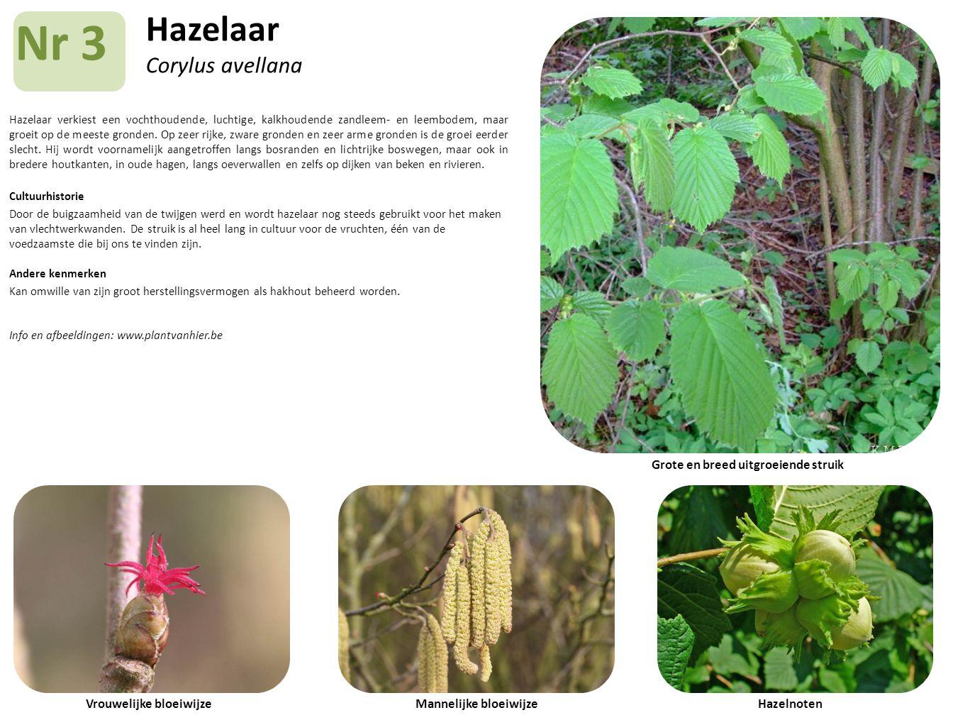 Hazelaar Corylus avellana Hazelaar verkiest een vochthoudende, luchtige, kalkhoudende zandleem- en leembodem, maar groeit op de meeste gronden. Op zee