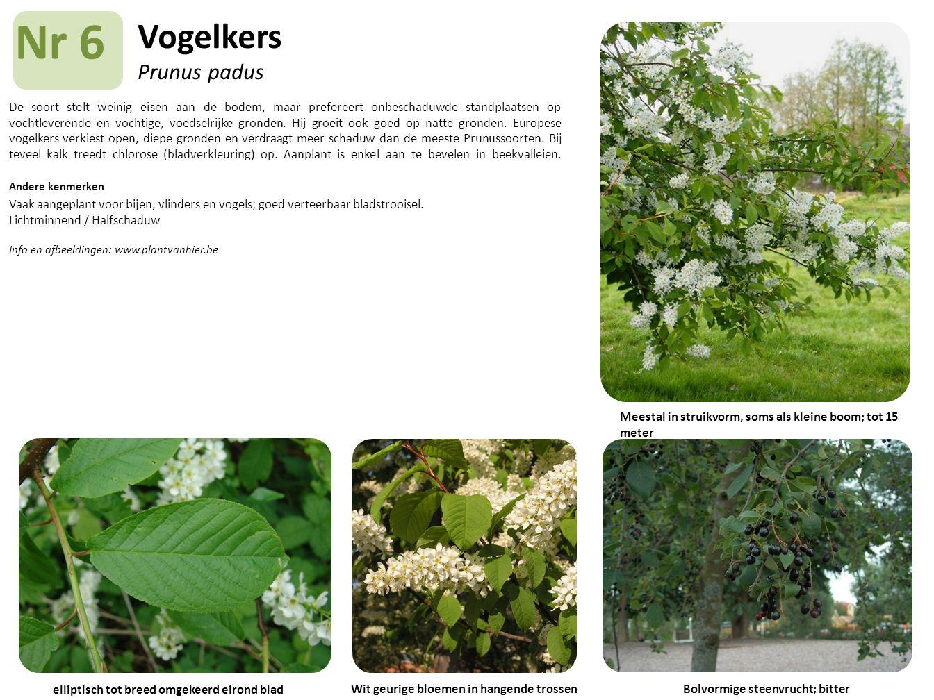 Vogelkers Prunus padus De soort stelt weinig eisen aan de bodem, maar prefereert onbeschaduwde standplaatsen op vochtleverende en vochtige, voedselrij