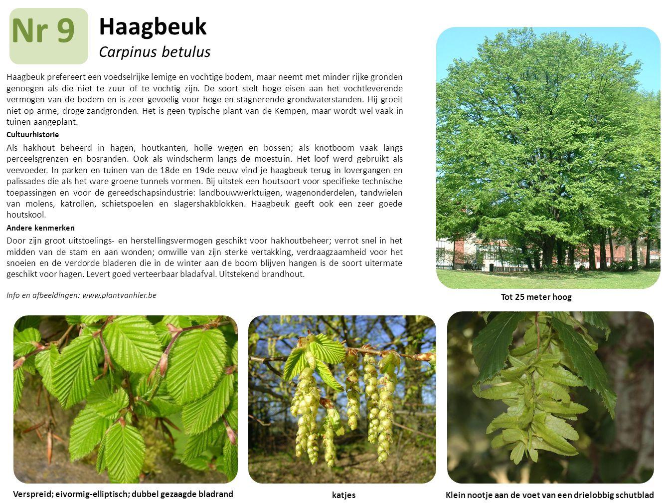 Haagbeuk Carpinus betulus Haagbeuk prefereert een voedselrijke lemige en vochtige bodem, maar neemt met minder rijke gronden genoegen als die niet te
