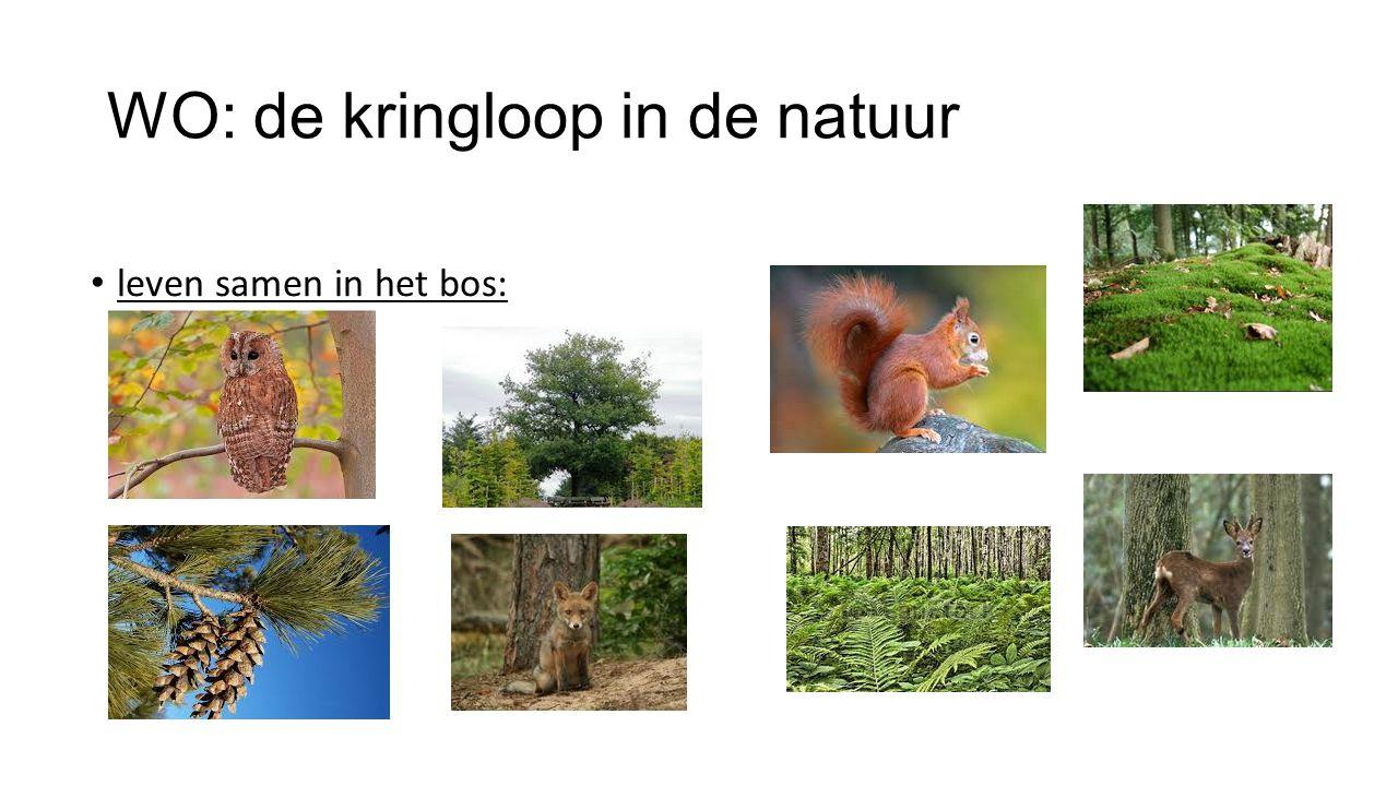 WO: de kringloop in de natuur leven samen in het bos: