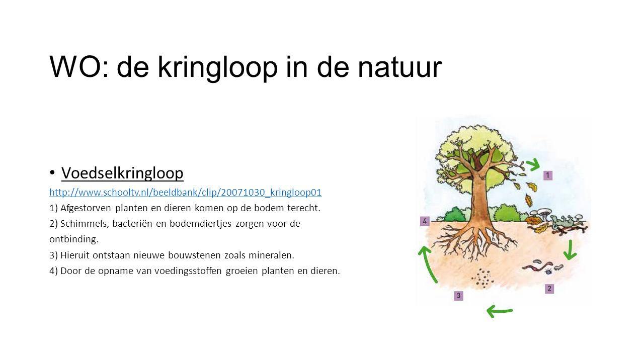 Voedselkringloop http://www.schooltv.nl/beeldbank/clip/20071030_kringloop01 1) Afgestorven planten en dieren komen op de bodem terecht.