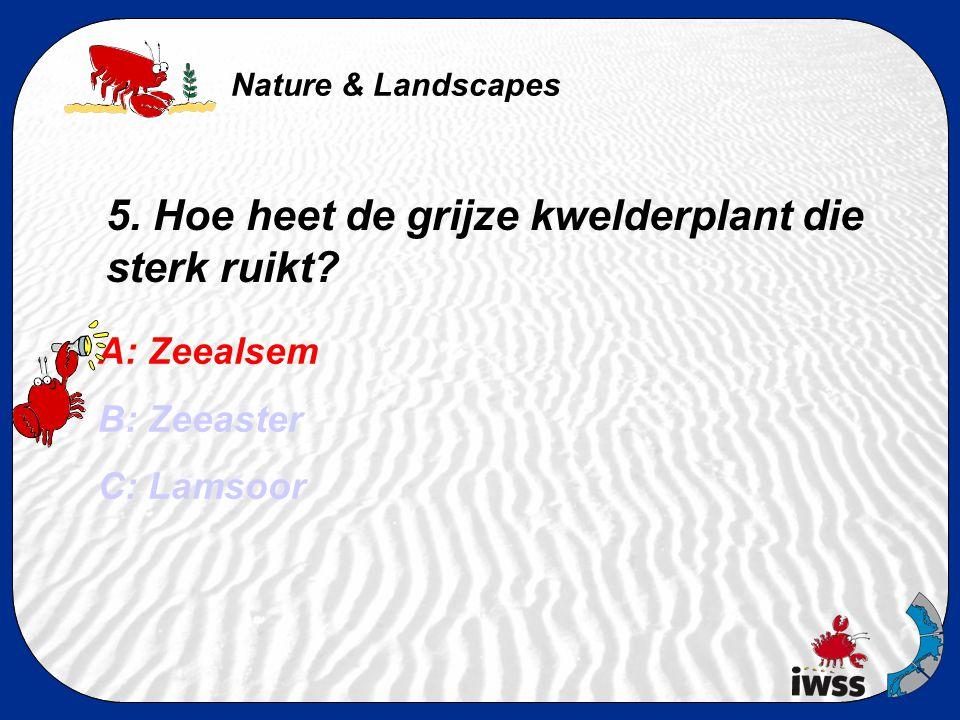 Nature & Landscapes 5. Hoe heet de grijze kwelderplant die sterk ruikt? A: Zeealsem B: Zeeaster C: Lamsoor