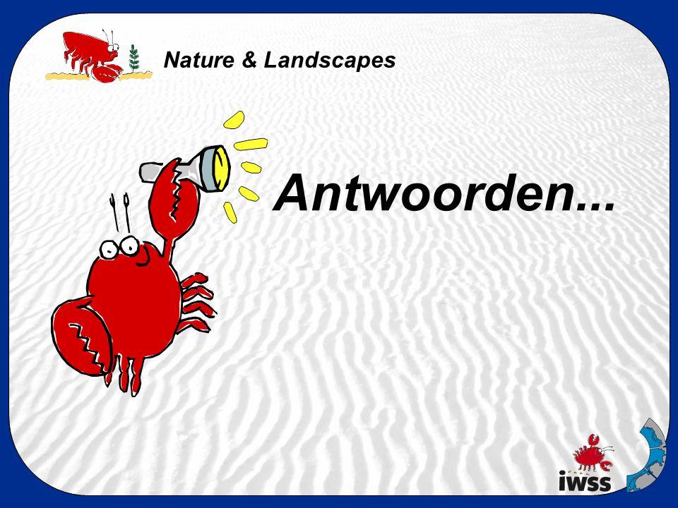 Nature & Landscapes 5.Hoe heet de grijze kwelderplant die sterk ruikt.