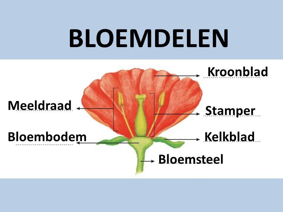 Kroonblad Stamper Kelkblad Bloemsteel Bloembodem Meeldraad BLOEMDELEN Kroonblad Kelkblad Bloemsteel Stamper Bloembodem Meeldraad