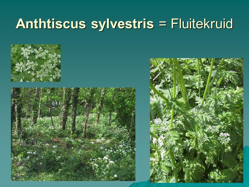 Equisetum arvense = Heermoes