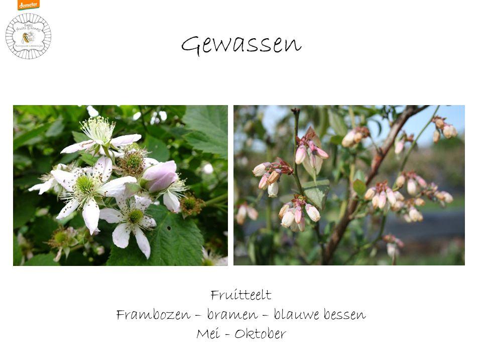 Gewassen Fruitteelt Frambozen – bramen – blauwe bessen Mei - Oktober