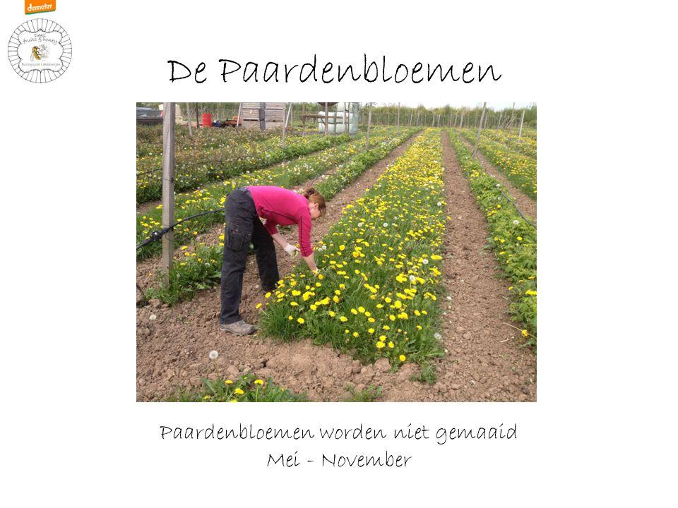 Heggen Natuurlijke heggen Meidoorn – Sleedoorn - Rozenbottel Maart - April