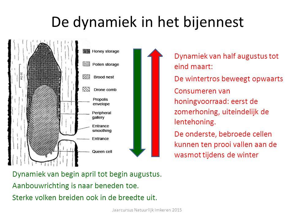 De dynamiek in het bijennest Dynamiek van begin april tot begin augustus.