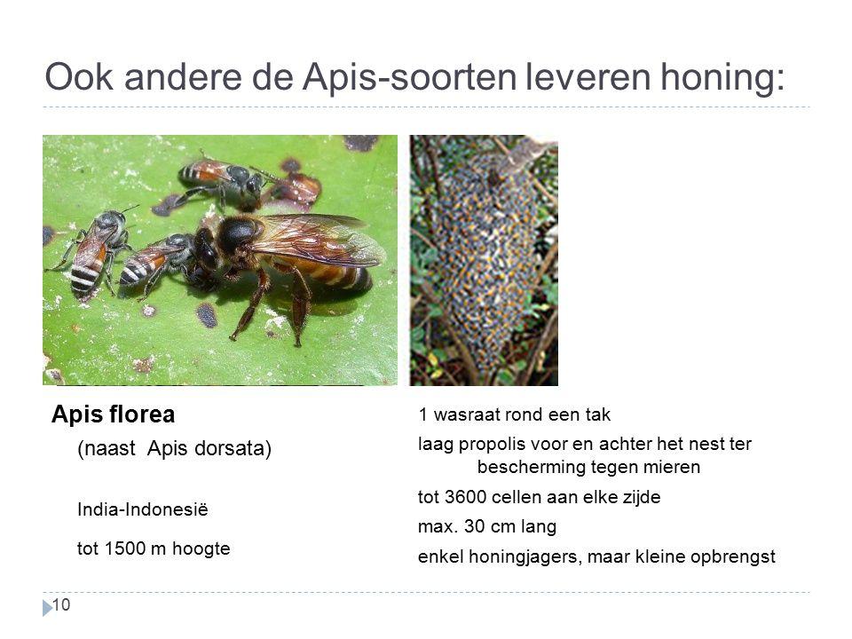 Ook andere de Apis-soorten leveren honing: 10 Apis florea (naast Apis dorsata) India-Indonesië tot 1500 m hoogte 1 wasraat rond een tak laag propolis voor en achter het nest ter bescherming tegen mieren tot 3600 cellen aan elke zijde max.