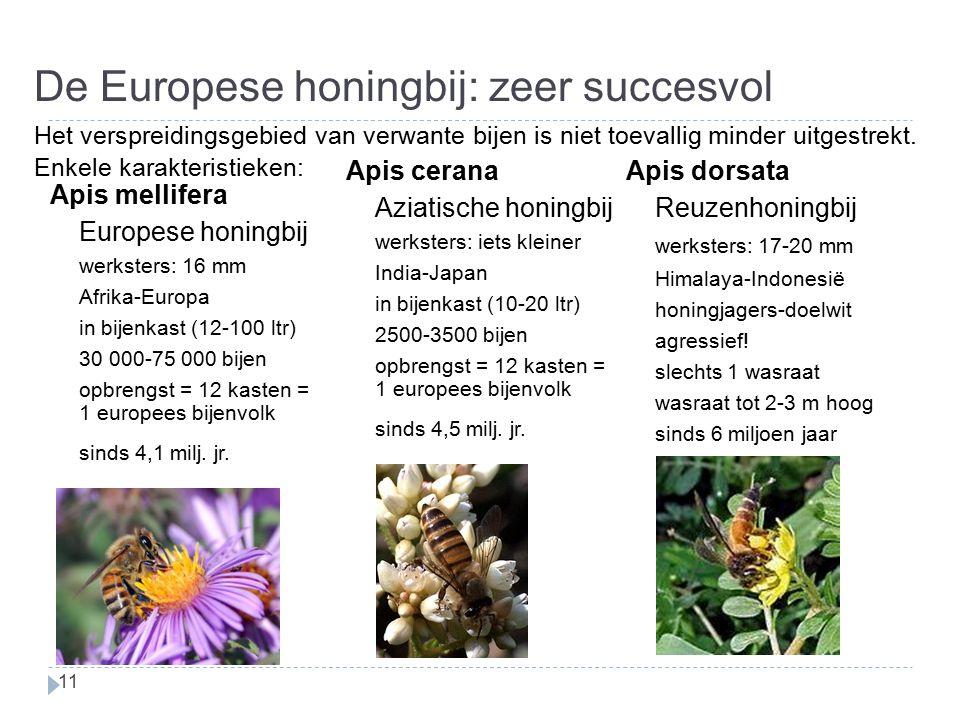 De Europese honingbij: zeer succesvol 11 Apis cerana Aziatische honingbij werksters: iets kleiner India-Japan in bijenkast (10-20 ltr) 2500-3500 bijen opbrengst = 12 kasten = 1 europees bijenvolk sinds 4,5 milj.