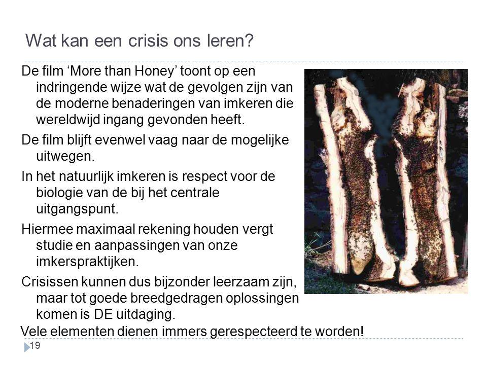 Wat kan een crisis ons leren? De film 'More than Honey' toont op een indringende wijze wat de gevolgen zijn van de moderne benaderingen van imkeren di