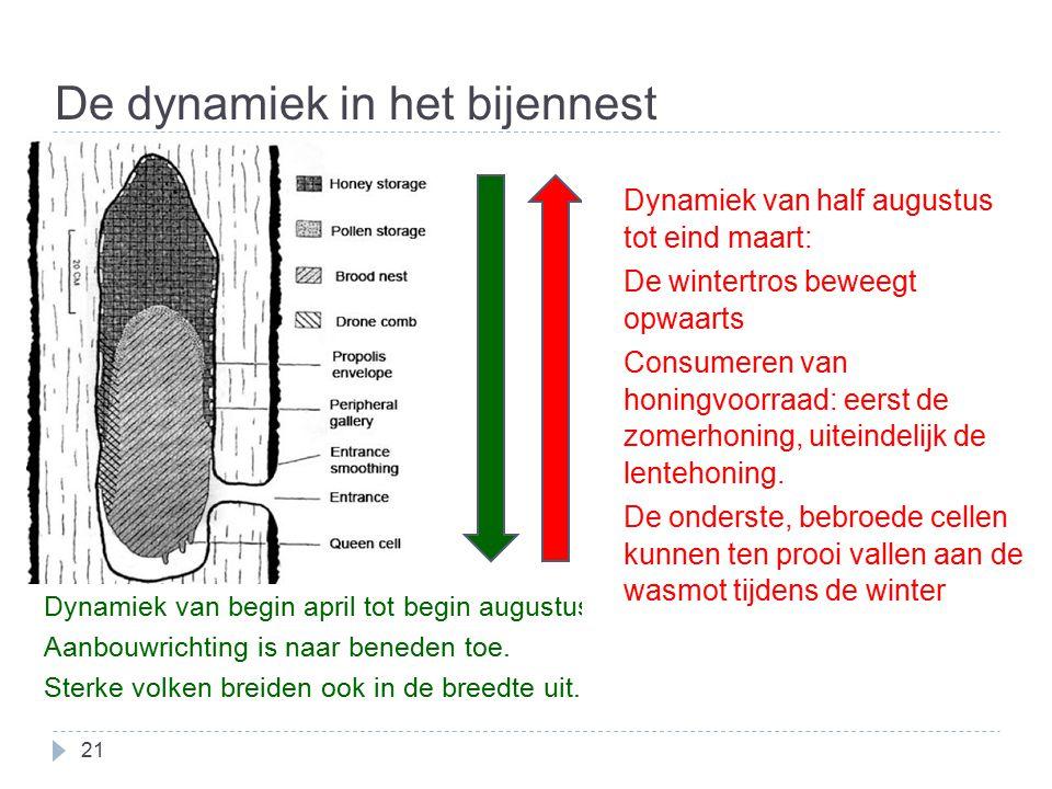 De dynamiek in het bijennest 21 Dynamiek van begin april tot begin augustus. Aanbouwrichting is naar beneden toe. Sterke volken breiden ook in de bree