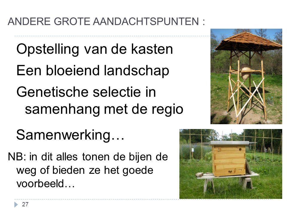 ANDERE GROTE AANDACHTSPUNTEN : 27 Opstelling van de kasten Een bloeiend landschap Genetische selectie in samenhang met de regio Samenwerking… NB: in dit alles tonen de bijen de weg of bieden ze het goede voorbeeld…