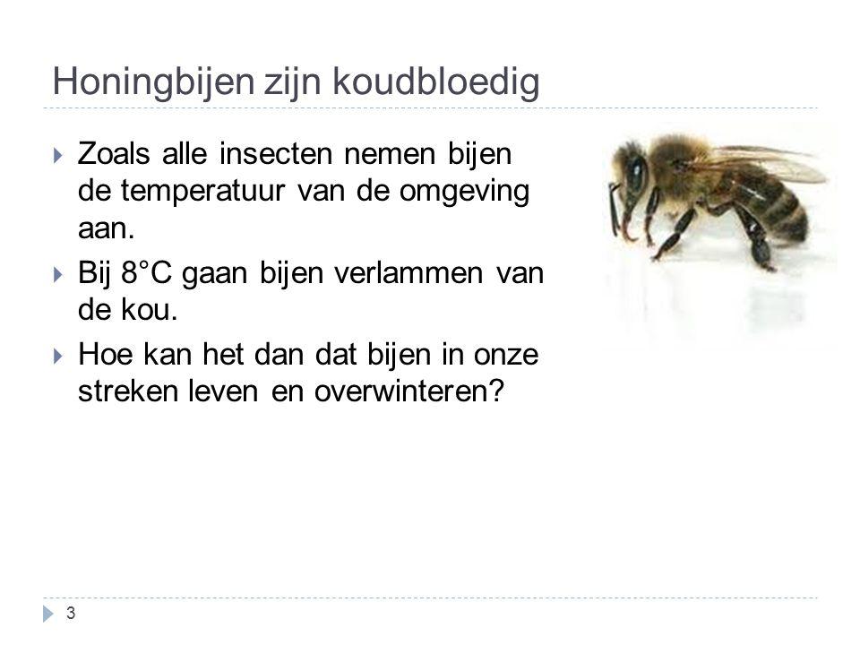 Honingbijen zijn koudbloedig  Zoals alle insecten nemen bijen de temperatuur van de omgeving aan.  Bij 8°C gaan bijen verlammen van de kou.  Hoe ka