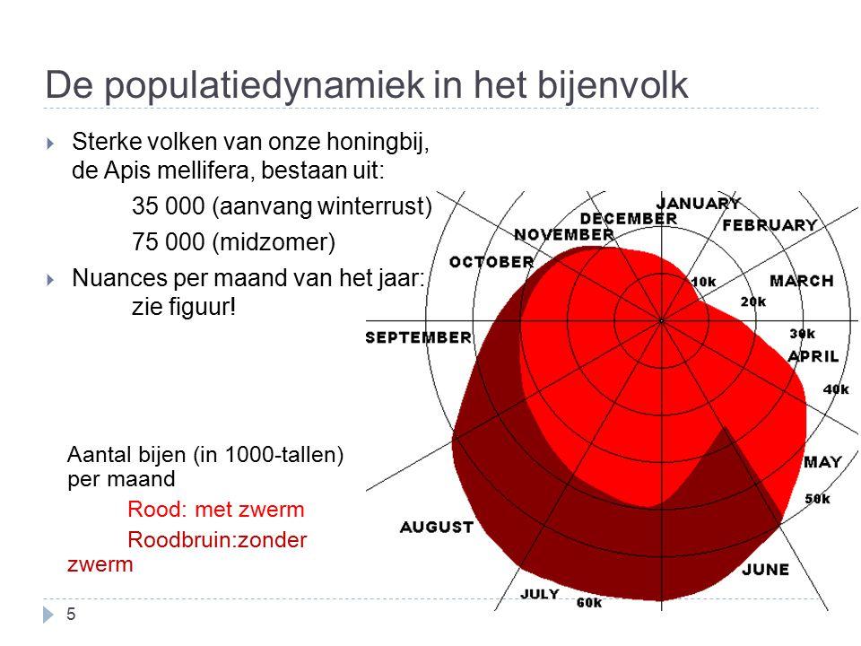 De populatiedynamiek in het bijenvolk 5 Aantal bijen (in 1000-tallen) per maand Rood: met zwerm Roodbruin:zonder zwerm  Sterke volken van onze honing