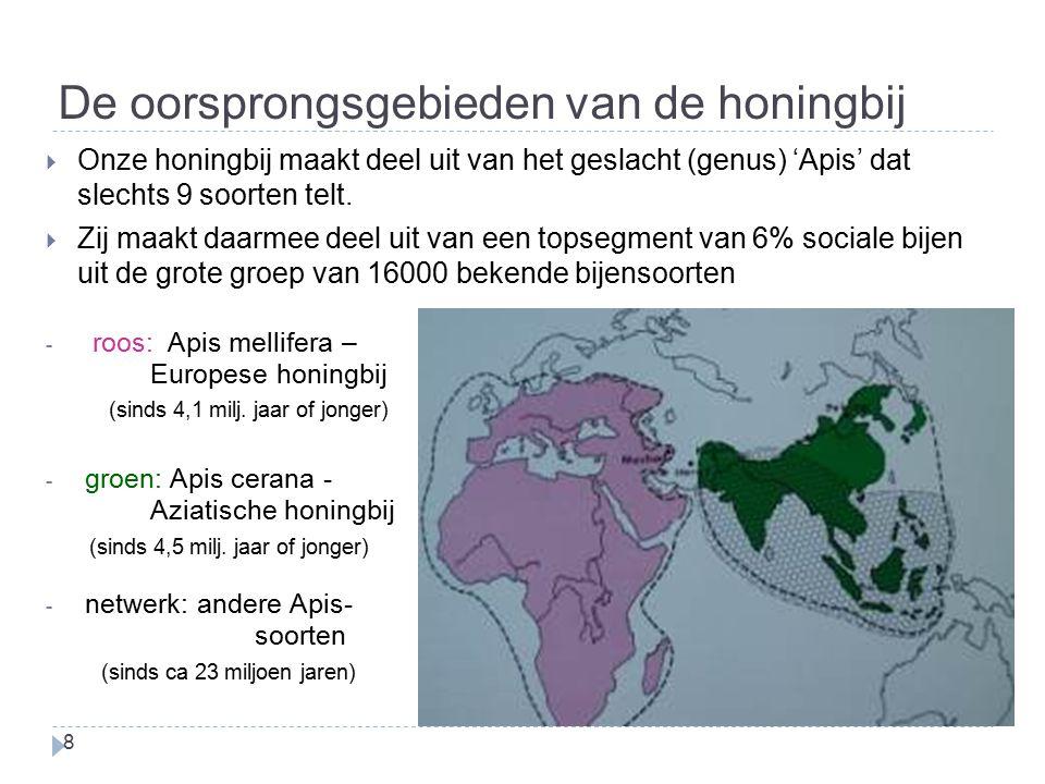 De oorsprongsgebieden van de honingbij 8 - roos: Apis mellifera – Europese honingbij (sinds 4,1 milj. jaar of jonger) - groen: Apis cerana - Aziatisch