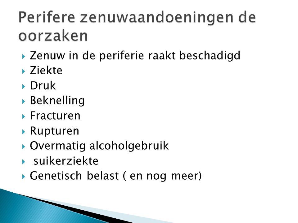  Zenuw in de periferie raakt beschadigd  Ziekte  Druk  Beknelling  Fracturen  Rupturen  Overmatig alcoholgebruik  suikerziekte  Genetisch belast ( en nog meer)
