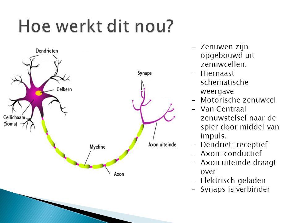-Zenuwen zijn opgebouwd uit zenuwcellen.