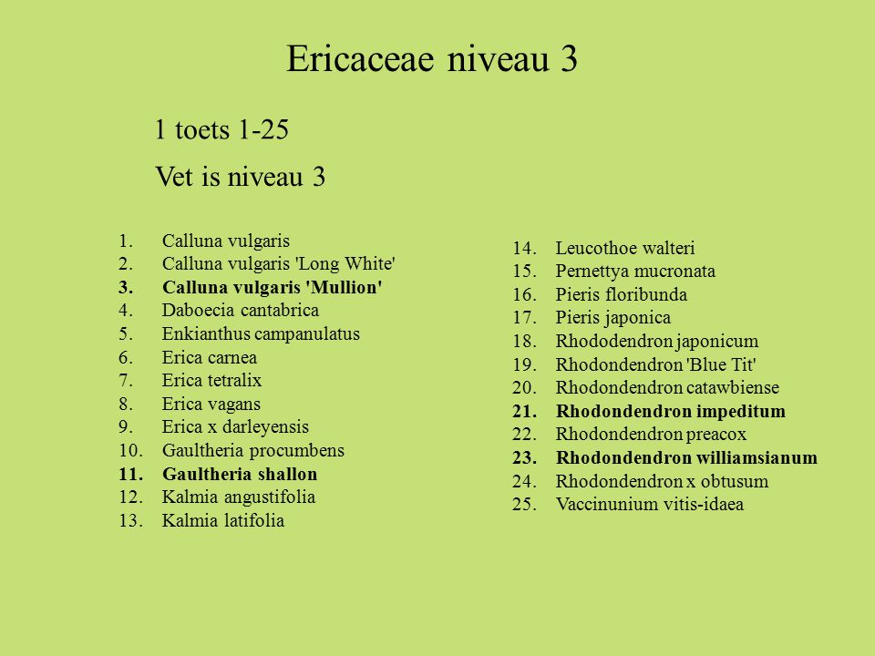 1.Calluna vulgaris 2.Calluna vulgaris Long White 3.Calluna vulgaris Mullion 4.Daboecia cantabrica 5.Enkianthus campanulatus 6.Erica carnea 7.Erica tetralix 8.Erica vagans 9.Erica x darleyensis 10.Gaultheria procumbens 11.Gaultheria shallon 12.Kalmia angustifolia 13.Kalmia latifolia 14.Leucothoe walteri 15.Pernettya mucronata 16.Pieris floribunda 17.Pieris japonica 18.Rhododendron japonicum 19.Rhodondendron Blue Tit 20.Rhodondendron catawbiense 21.Rhodondendron impeditum 22.Rhodondendron preacox 23.Rhodondendron williamsianum 24.Rhodondendron x obtusum 25.Vaccinunium vitis-idaea Ericaceae niveau 3 1 toets 1-25 Vet is niveau 3