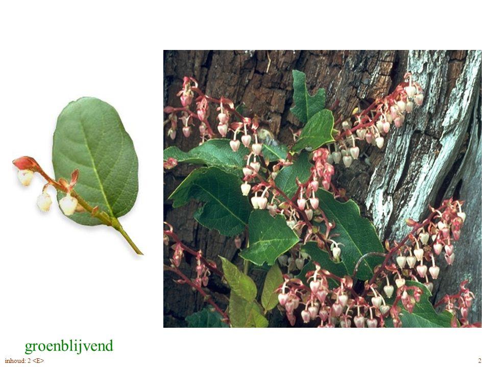groenblijvend Gaultheria shallon blad, bloei 2inhoud: 2