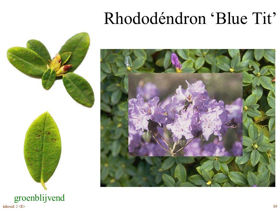 Rhododéndron 'Blue Tit' groenblijvend 89inhoud: 2