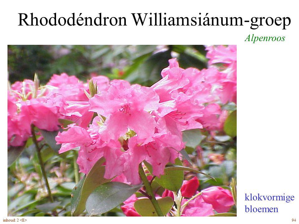 Rhododéndron Williamsiánum-groep Alpenroos iets hartvormige bladvoet klokvormige bloemen 94inhoud: 2
