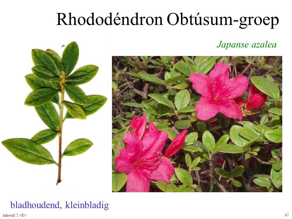 Rhododéndron Obtúsum-groep bladhoudend, kleinbladig Japanse azalea 97inhoud: 2