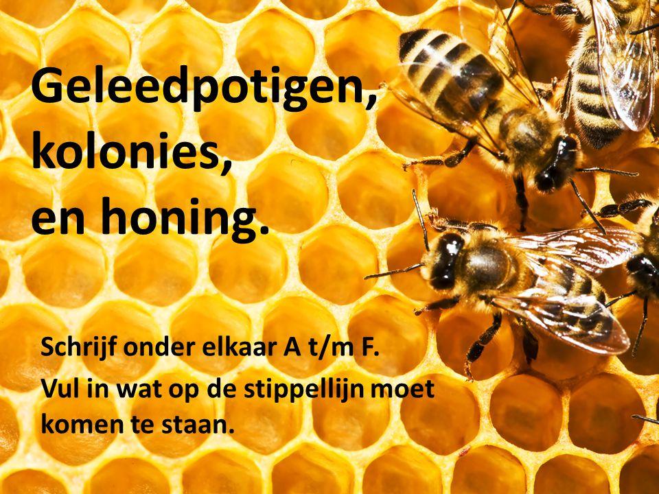 Geleedpotigen, kolonies, en honing. Schrijf onder elkaar A t/m F. Vul in wat op de stippellijn moet komen te staan.