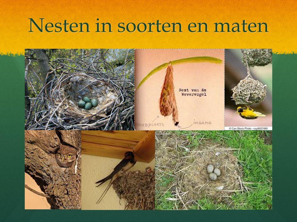 Nesten in soorten en maten 2