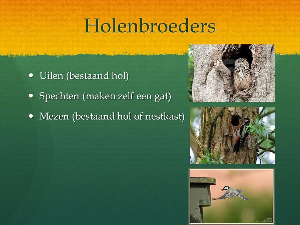 Holenbroeders Uilen (bestaand hol) Uilen (bestaand hol) Spechten (maken zelf een gat) Spechten (maken zelf een gat) Mezen (bestaand hol of nestkast) M