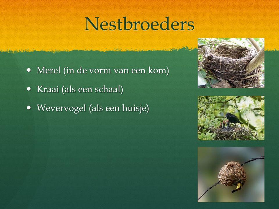 Nestbroeders Merel (in de vorm van een kom) Merel (in de vorm van een kom) Kraai (als een schaal) Kraai (als een schaal) Wevervogel (als een huisje) W