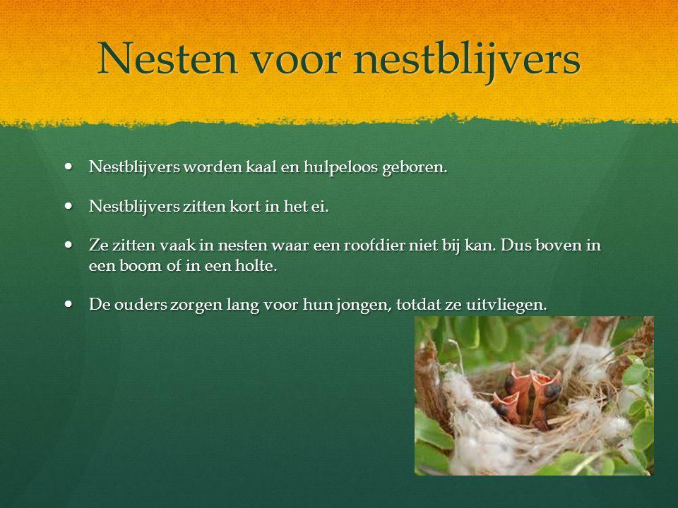 Nesten voor nestblijvers Nestblijvers worden kaal en hulpeloos geboren. Nestblijvers worden kaal en hulpeloos geboren. Nestblijvers zitten kort in het