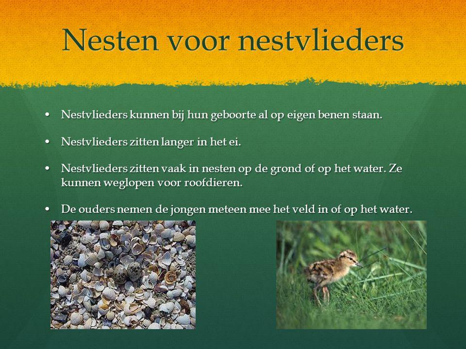 Nesten voor nestvlieders Nestvlieders kunnen bij hun geboorte al op eigen benen staan.Nestvlieders kunnen bij hun geboorte al op eigen benen staan. Ne