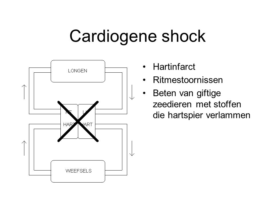 Cardiogene shock Hartinfarct Ritmestoornissen Beten van giftige zeedieren met stoffen die hartspier verlammen