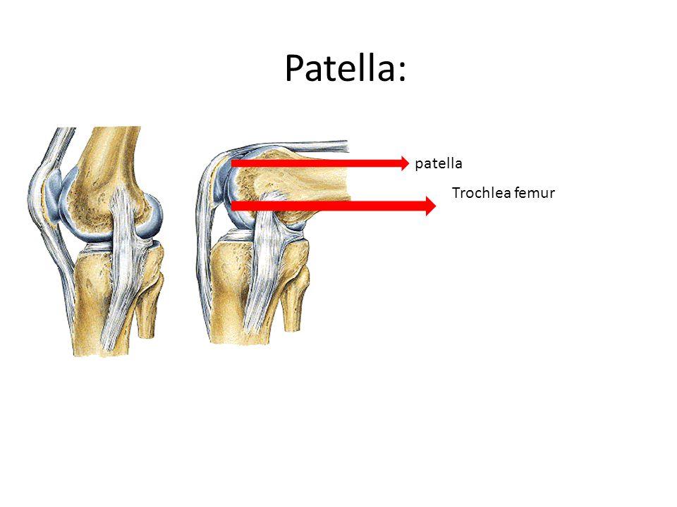 Patella: Trochlea femur patella
