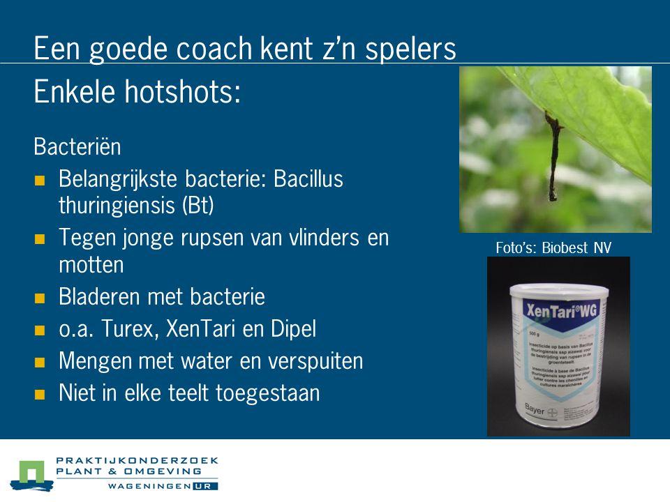 Een goede coach kent z'n spelers Enkele hotshots: Bacteriën Belangrijkste bacterie: Bacillus thuringiensis (Bt) Tegen jonge rupsen van vlinders en mot