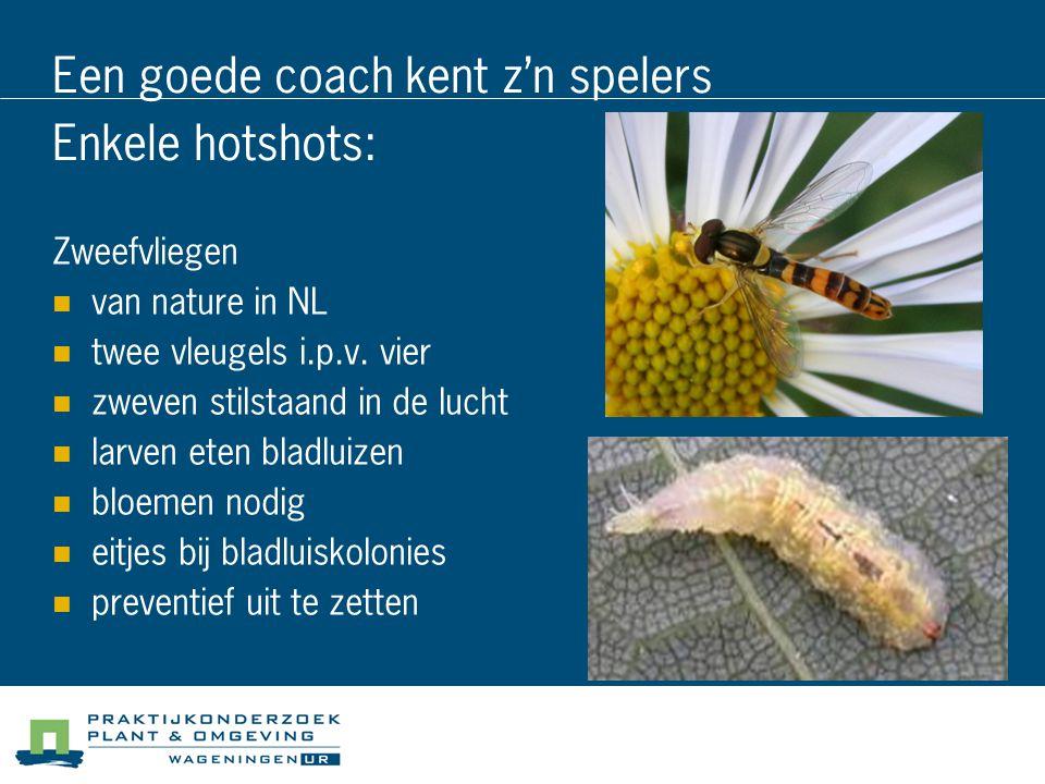 Een goede coach kent z'n spelers Enkele hotshots: Zweefvliegen van nature in NL twee vleugels i.p.v. vier zweven stilstaand in de lucht larven eten bl