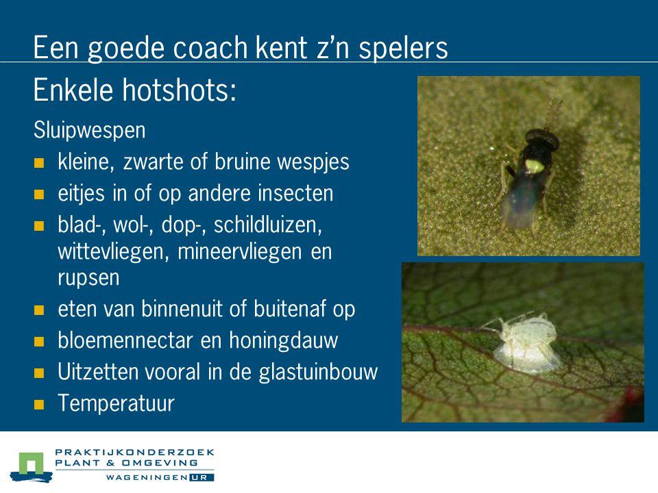 Een goede coach kent z'n spelers Enkele hotshots: Sluipwespen kleine, zwarte of bruine wespjes eitjes in of op andere insecten blad-, wol-, dop-, schi