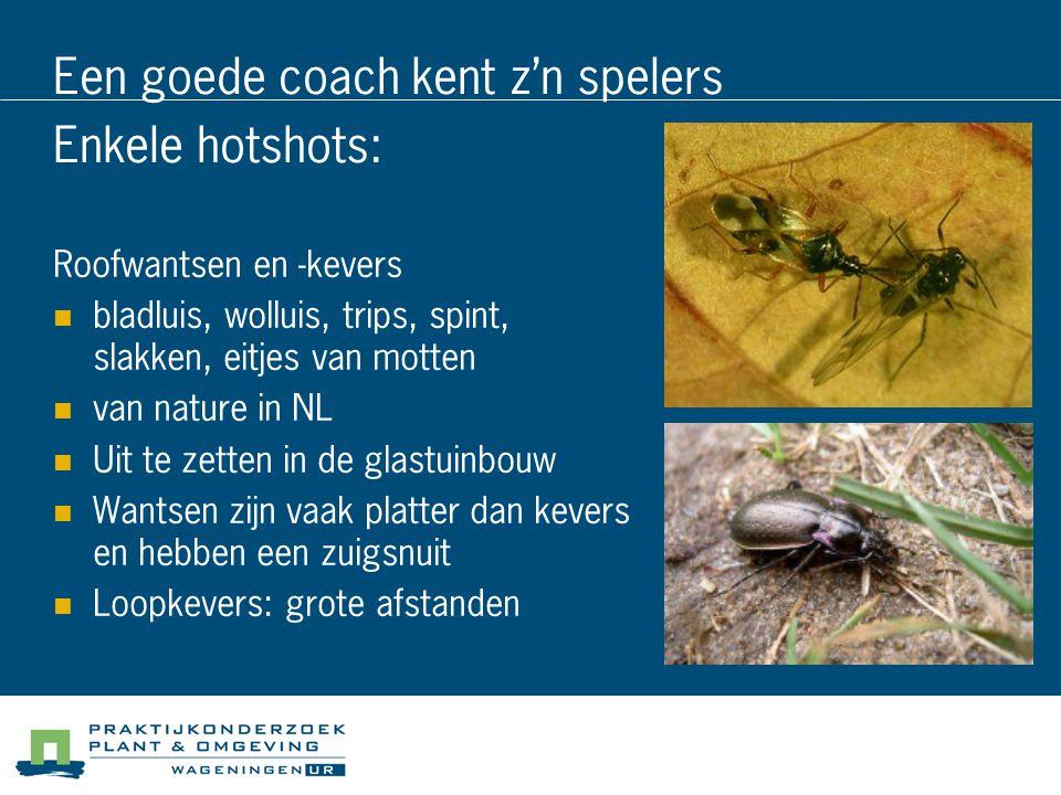 Een goede coach kent z'n spelers Enkele hotshots: Roofwantsen en -kevers bladluis, wolluis, trips, spint, slakken, eitjes van motten van nature in NL