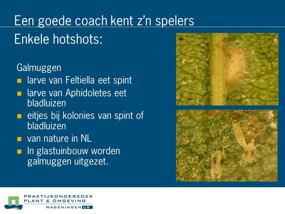 Een goede coach kent z'n spelers Enkele hotshots: Galmuggen larve van Feltiella eet spint larve van Aphidoletes eet bladluizen eitjes bij kolonies van