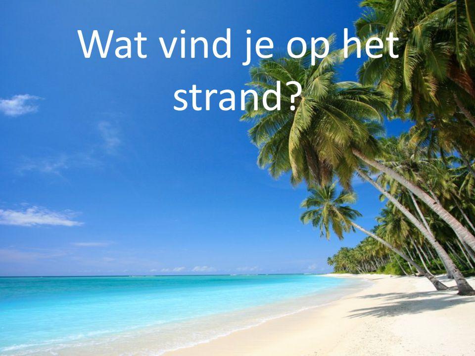 Wat vind je op het strand?