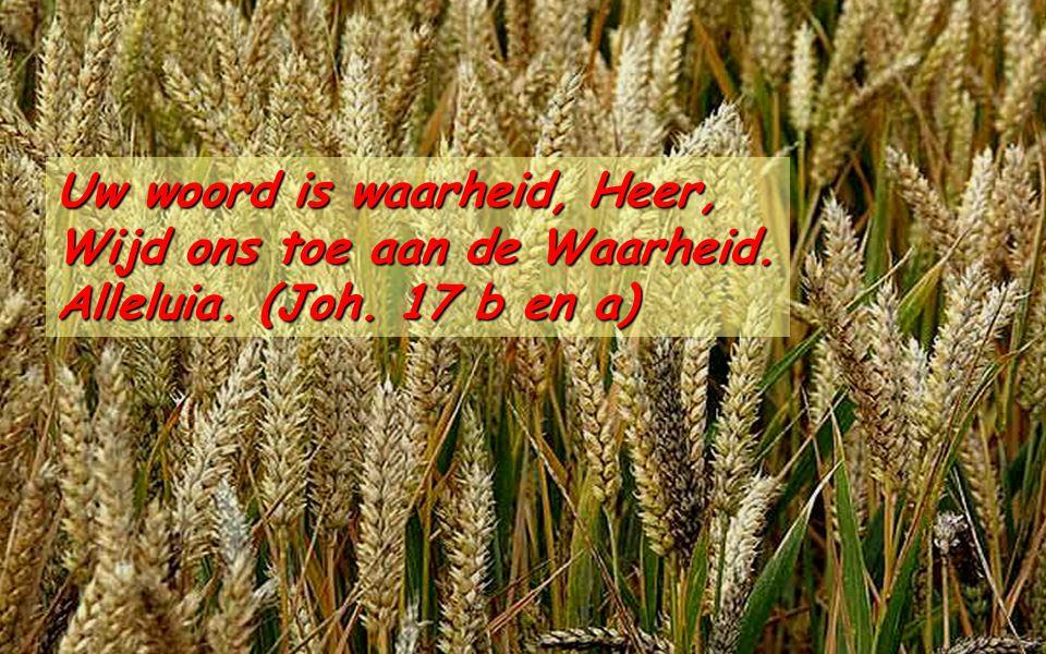 Ef 4,17.20-24 Broeders en zusters, Ik bezweer u in de Heer: leeft niet langer zoals de heidenen in hun waanwijsheid.