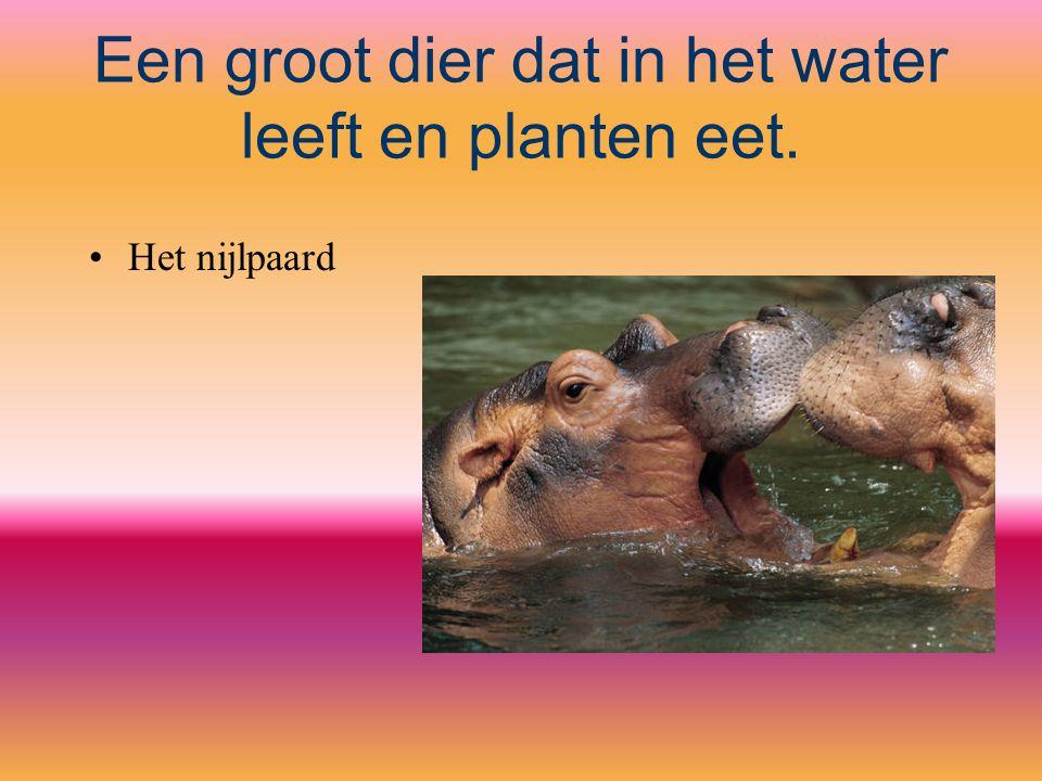 Een groot dier dat in het water leeft en planten eet. Het nijlpaard